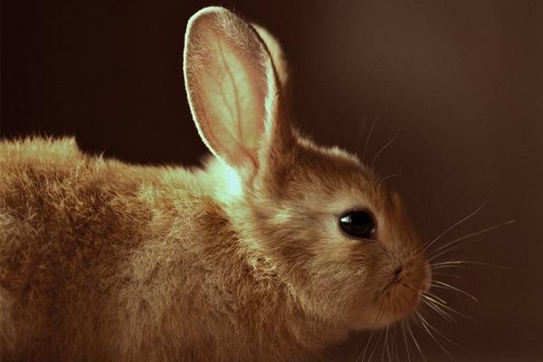 coniglio-animale-compagnia-benefici