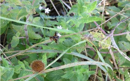 mosca_dell'olivo_lotta_biologica