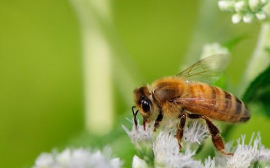 api_rischio_estinzione_utilità