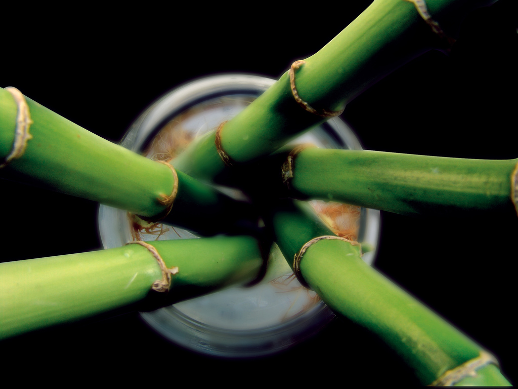 bamboo_massage_benefici_bamboo_therapy