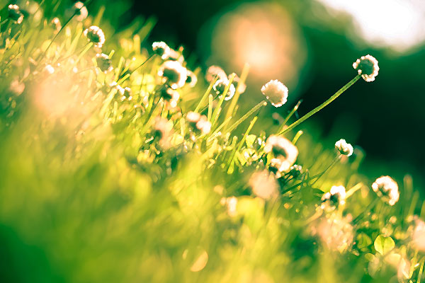 depurazione_primaverile_cura_di_primavera