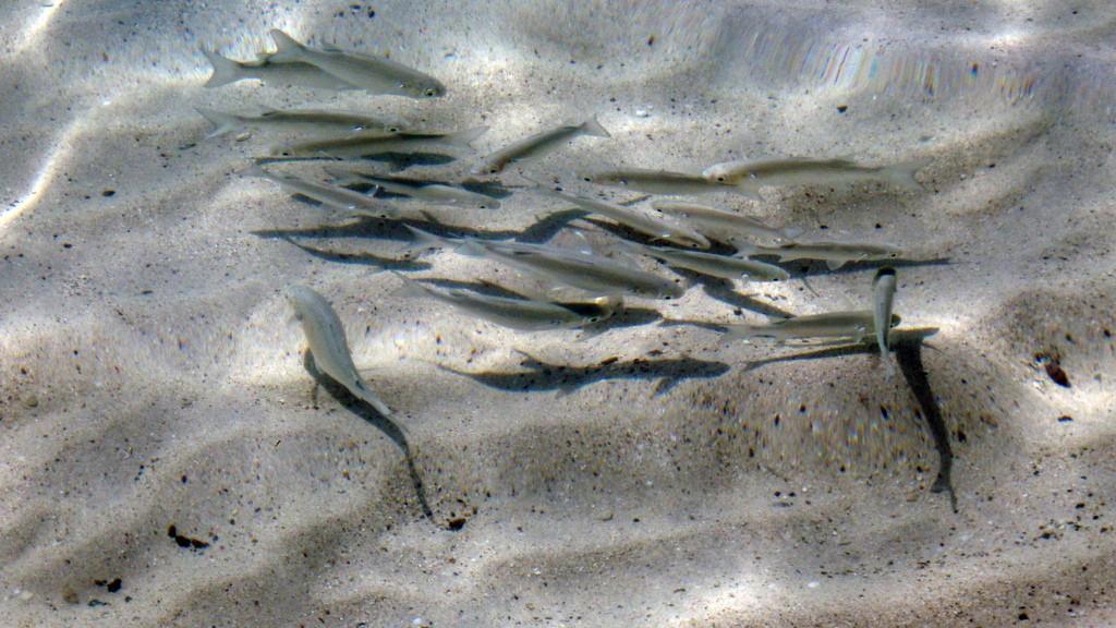 Pesce_e_mercurio