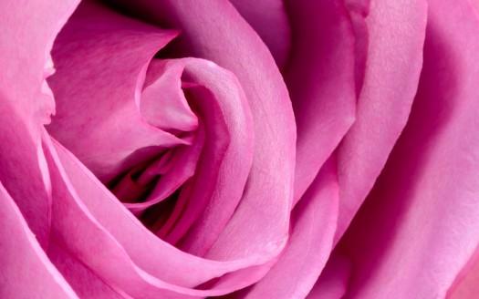 colore rosa