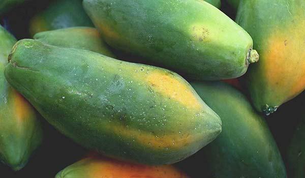 Papaya maturazione