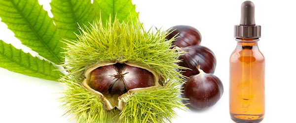 ippocastano frutti
