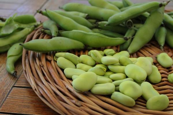 Santoreggia o satureja hortensis proprietà terapeutiche e usi in