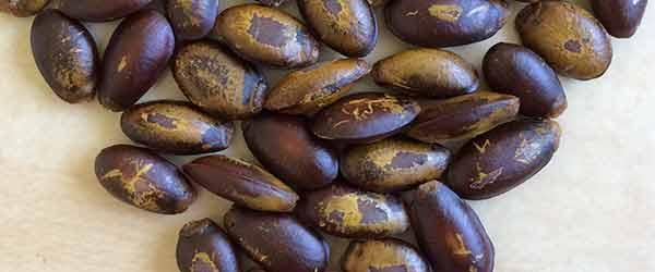 semi di graviola