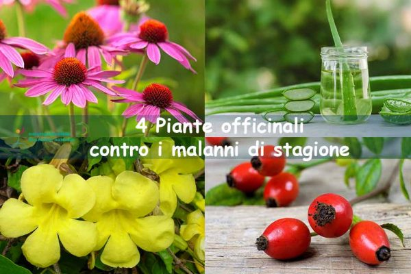 Piante officinali