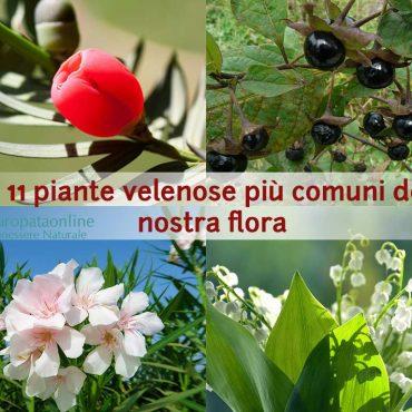11 piante velenose da conoscere
