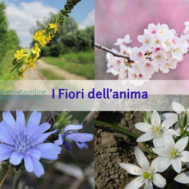 Floriterapia: cos'è e come funziona