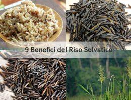 riso-selvatico-zizania acquatica