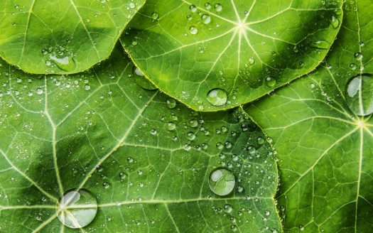 Vitalismo in naturopatia