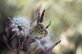farfalla-pensiero-positivo
