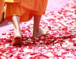 monaco-cammino