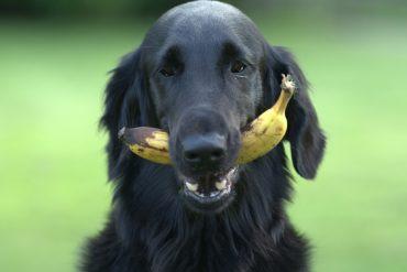 cani-banane