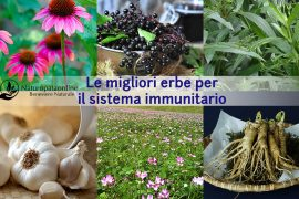 erbe-per-il-sistema-immunitario