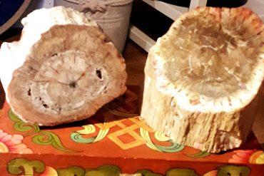 legno-fossile